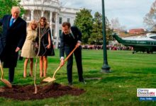 Photo of Árbol de la amistad plantado por Trump y Macron ha muerto