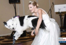 Photo of Video viral: ¡novia baila con su perro en su boda!