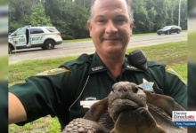 Photo of Tortuga detenida por bloquear carretera en Florida