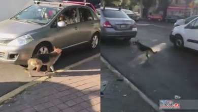 "Photo of Video: Indigna caso de perrito abandonado por su ""familia"""