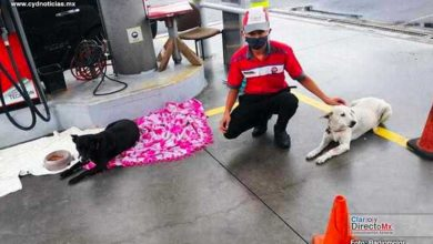 Photo of Empleado de gasolinera arropa a perritos sin hogar durante la lluvia