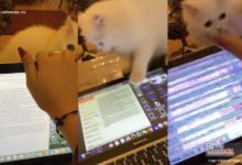 "Photo of ""No me provoques humano"", así reacciona un lindo gatito por el home office de su ""amiga humana"""