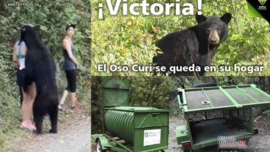 Photo of Organización Animal Héroes en contra de que oso viralizado en selfie sea puesto en cautiverio