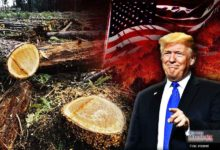 Photo of Sugiere Trump talar árboles para evitar los incendios forestales
